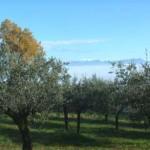 Olio e Vino - Bevagna