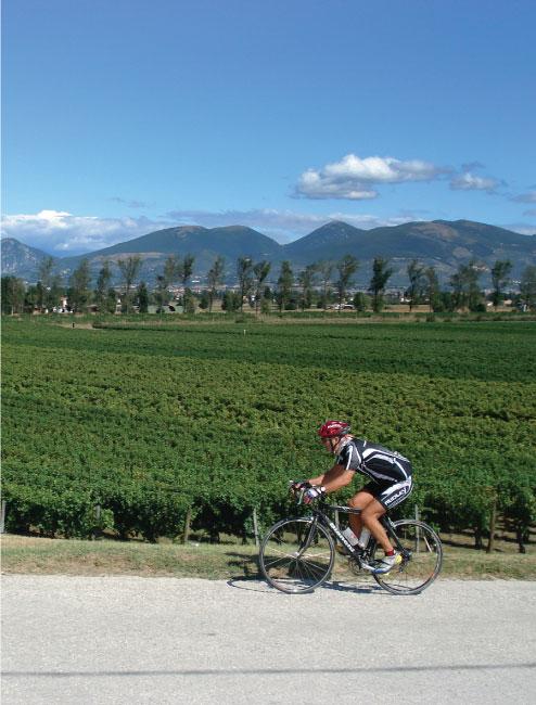 [cml_media_alt id='1372']Assisi Spoleto in Bici - Bevagna[/cml_media_alt]